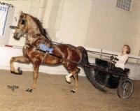 Kathys-Horse-Max-300x239.jpg